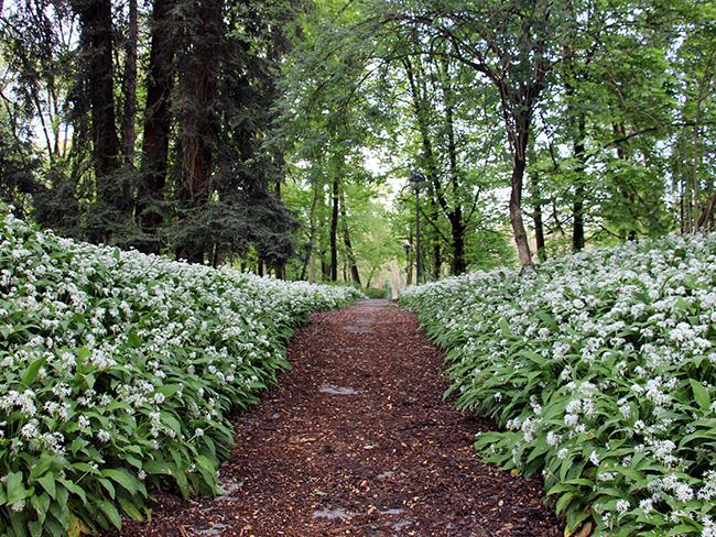Giardini della villa reale di monza gite in lombardia for Laghetti nei giardini