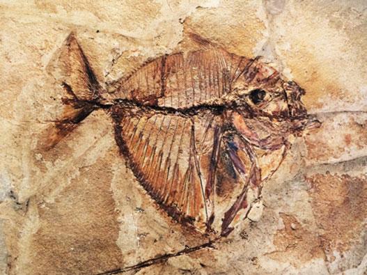 parco-paleontologico-cene