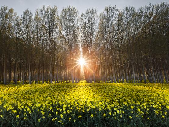 primavera_grande