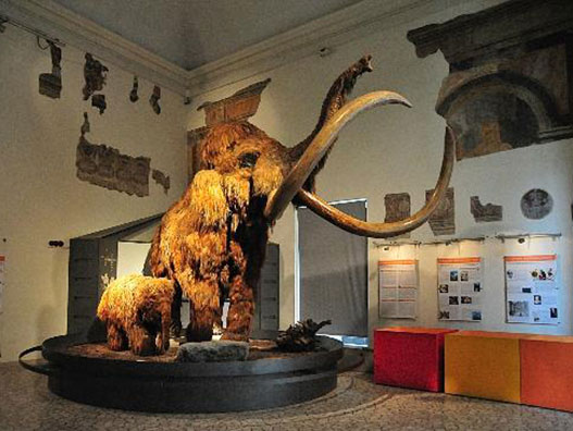 museo-scienze-naturali-bergamo